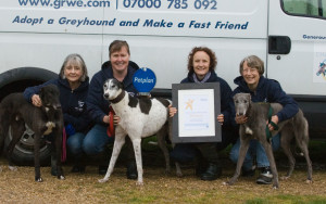grwe, greyhound rescue west of england, somerset, frome,