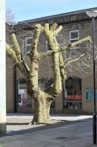 The London Plane Tree